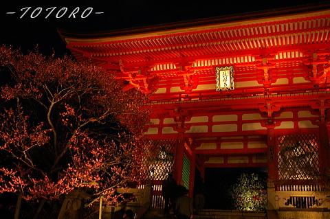 07hanatouro002.jpg