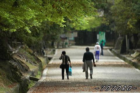4-22nara-midori001.jpg