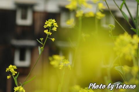 fusimi-matumoto004.jpg