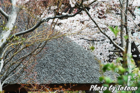 higasiyama1-003.jpg