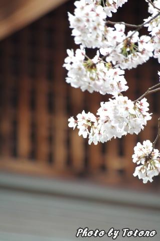 higasiyama1-007.jpg