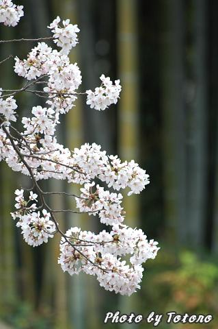 higasiyama1-008.jpg