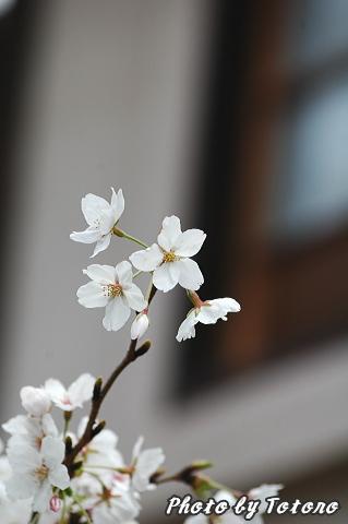 higasiyama1-009.jpg