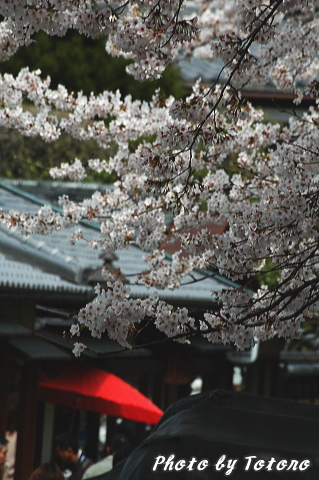 higasiyama1-010.jpg