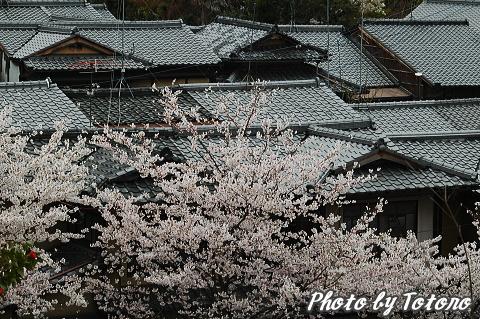 higasiyama1-011.jpg