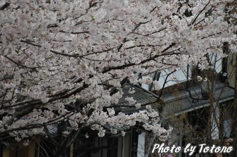 higasiyama1-012.jpg