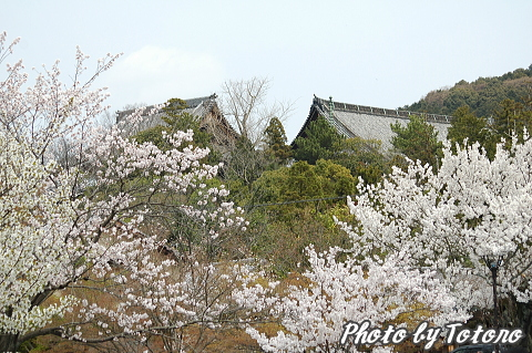 higasiyama1-019.jpg
