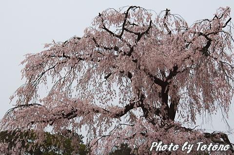higasiyama1-020.jpg