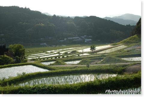 nagatani003.jpg