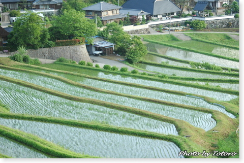 nagatani006.jpg