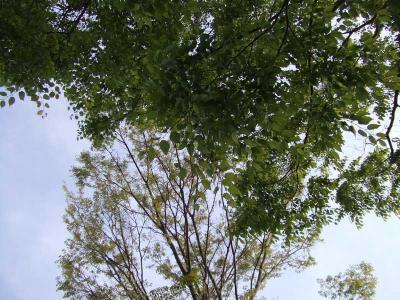 20060505-01.jpg