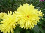 ベストショット!此花もでかいですよ。