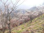 桜山頂上付近です。暖かな光が差し、季節を間違えそう。