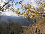 山里にも春かな!?。