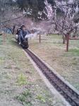 こんな感じで運行します。もっと梅が咲いていたら....。