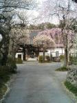 西光寺の門構え。手前に枝垂桜が!!。
