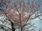墓場に咲く桜。ピンクのカワイイものです。多分....以下略。