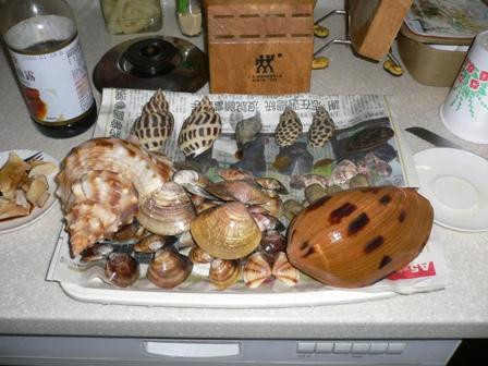 市場の貝殻採取