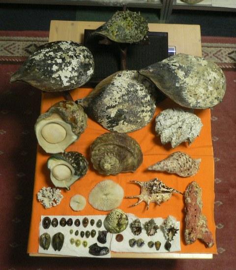 07'石垣島の貝殻