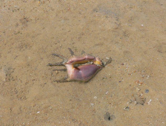クモガイの発見2