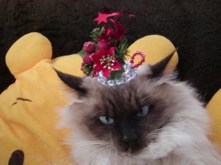 クリスマスティアラ