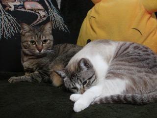 プリンとミー