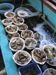牡蠣喰いツー その1