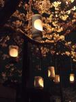 桜灯籠・2
