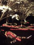 桜灯籠・4