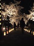 桜灯籠・1