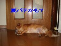20060831105137.jpg