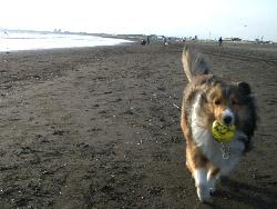 やっぱ、ボールでしょ!!