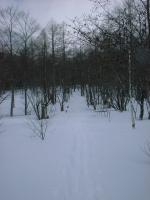 SnowRoad1.jpg