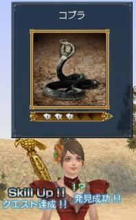 コブラでスキルアップ