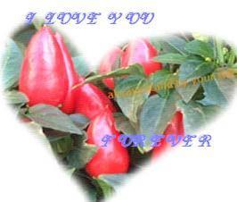 81156_1116350041.jpg