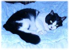 cat10-17-4.jpg