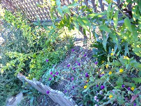 garden11-1-1.jpg