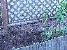 garden11-1-3jpg.jpg