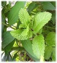 garden5-20-1.jpg