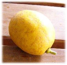 lemon1-14-1.jpg