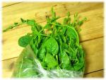 vegetable28-2s.jpg