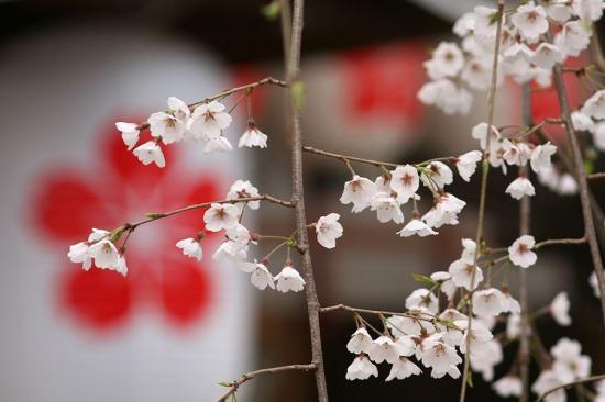 平野神社4